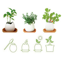 2018 Colorful Creative DIY Mini Lucky Egg Potted Plant Office Desktop Use for Home Garden Decor(China)