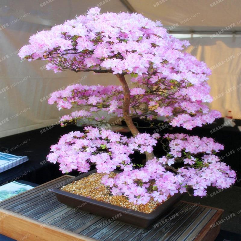 Rbol de los bonsai japon s compra lotes baratos de - Plantas para jardin japones ...
