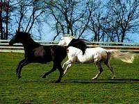 Running Sterke Paarden, Klassieke Decoratie Art Foto, Wandtapijten, Muur opknoping