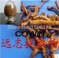 Растительный экстракт производители продажи Polygala экстракт 100 г Radix Polygalae