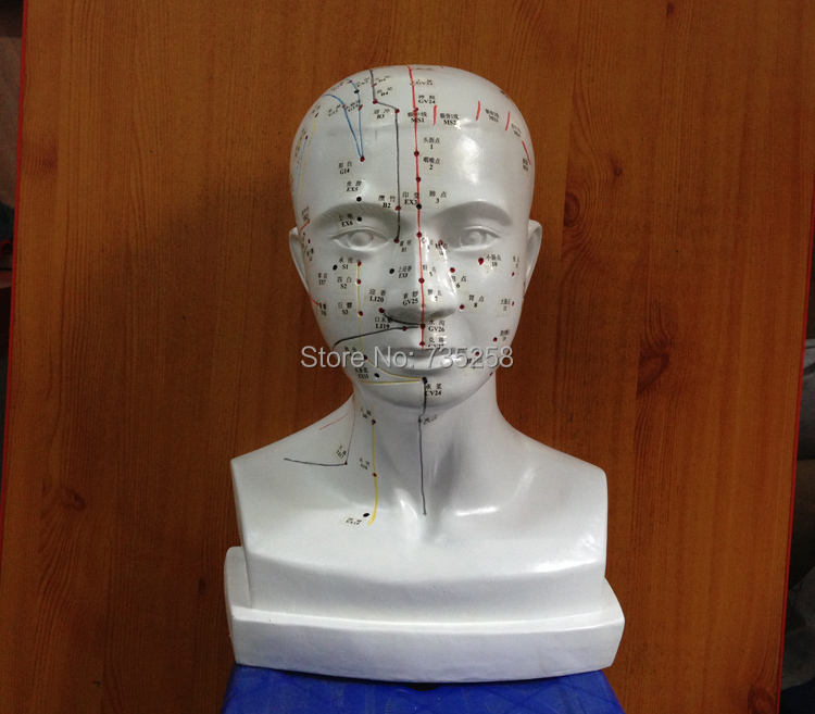 ФОТО 1:1 Head Acupuncture Point Model ,The Human Head Acupuncture Point Model ,Head Meridian Model
