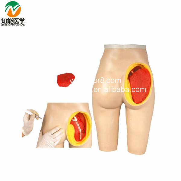 Advanced Hip Muscle Injection And Anatomical Structure Model  BIX-H4T WBW095 bix y1005 standard anatomical acupuncture model 60cm