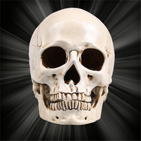 Human Skull Resin Replica Medical Model Lifesize 1:1 Halloween Home Decoration High Quality Decorative Craft Skull