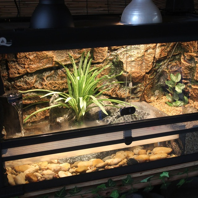 Turtle Tank Kit With Wire Mesh Lid Basking Platform Background