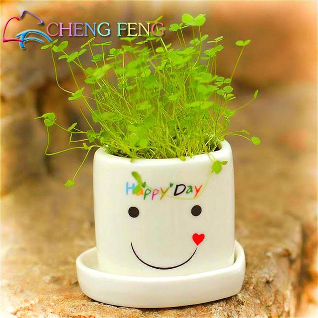 Mini Bonsai Grass Seeds 200/bag Easy To Grow Refreshing Beauty Office Desk  Green Potted