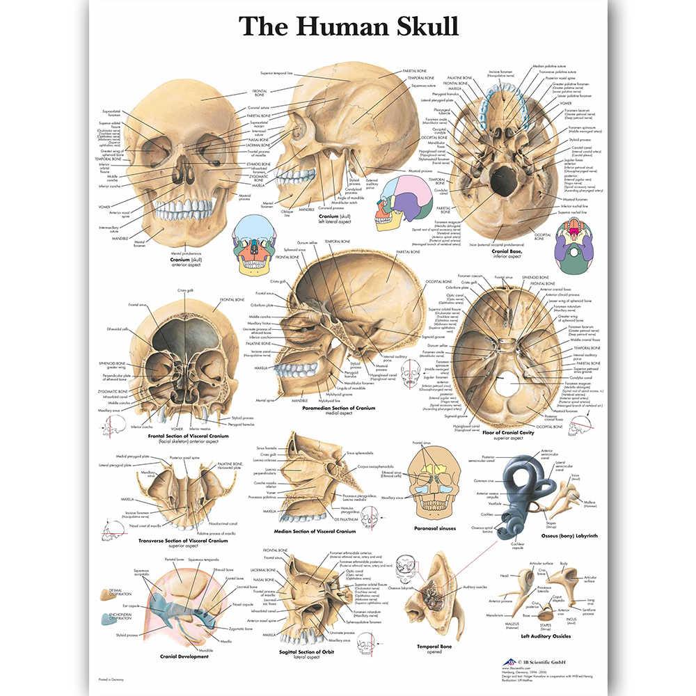 WANGART Анатомия человека диаграмма плакат карта холст живопись настенные картины для медицинского образования доктора офис класс домашний декор