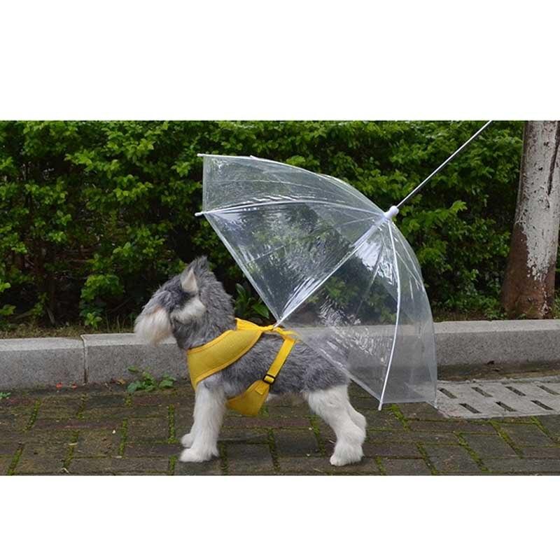 Fiducioso Nuovo Arrivo Giorno Di Pioggia Outdoor A Piedi Ombrello Cane Impermeabile Pet Cane Ombrello Trasparente Ombrello Impermeabile Con Guinzaglio Da Numerosi In Varietà