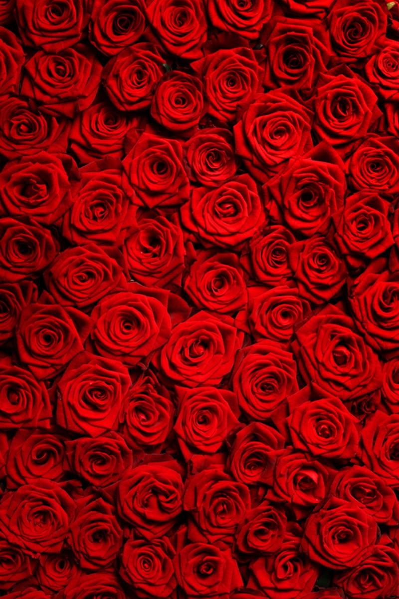 HUAYI Valentine Day Wall Backdrop Newbowns Photography