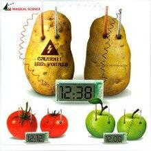 Часы картофель электрохимический клеточный эксперимент материал, Забавный домашний школьный зеленый научный образовательный комплект