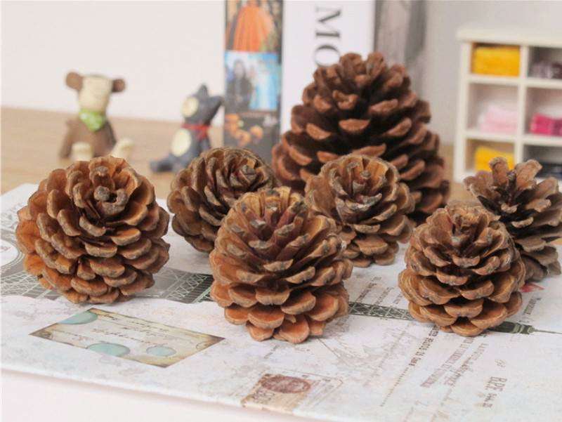 New 10Pcs Creative Decorations Natural Pinecone Dry Pine