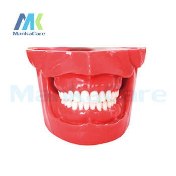 Manka Care - Extraction Model Oral Model Teeth Tooth Model