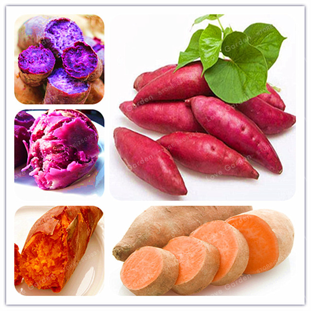 20PcsBag Sweet Potato Seeds Vegetables Seeds Fresh Food Fruit And