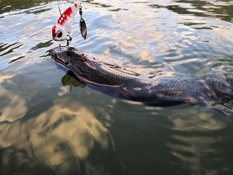 MZ55 Tất Cả Nước Cấp Độ Kim Loại VIB Cứng Nhân Tạo Mồi Câu Cá Chìm VIB Câu Cá Nhân Tạo Mồi Câu Cá Cho Pike Wobblers Cau