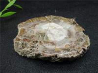 Natural Stones And Minerals Crystal Woodstone Fossil Tree For Coaster Home Decoration Wooden Tree Fossil Madagascar
