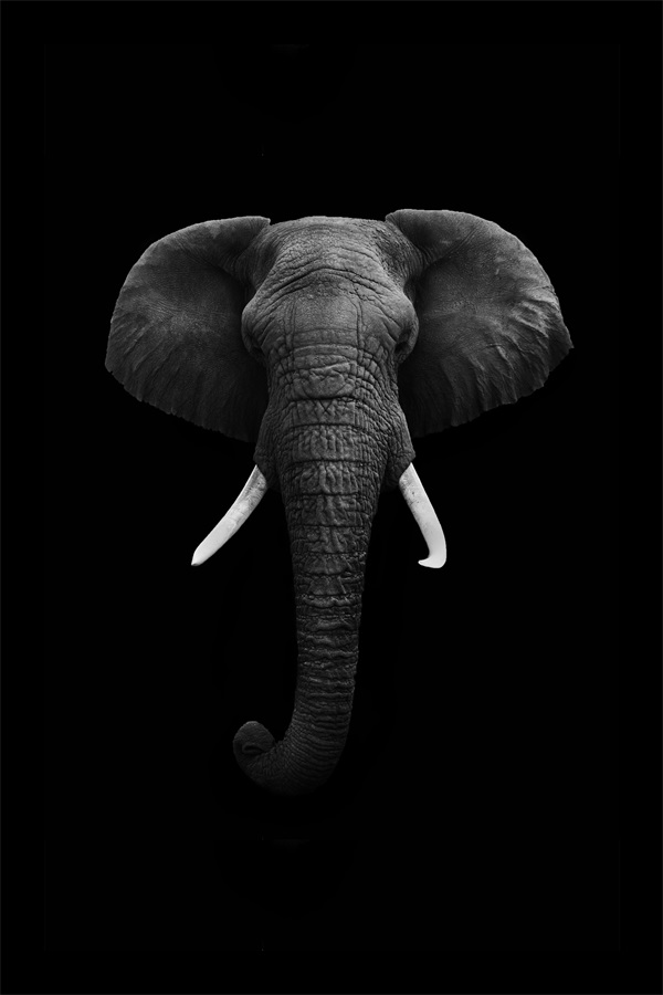 Custom Canvas Art Elephant Poster Elephant Wallpaper Animals Wall Stickers Christmas Sticker