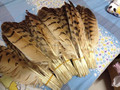 Free shipping wholesale high quality 20pcs owl eagle feather 34-37cm / 13-15inch various decorative diy collect