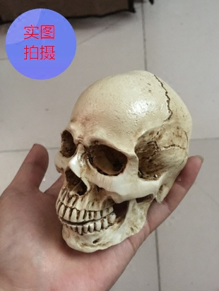 Painting art sketch small skull skull model model resin skulls office furnishing articles of handicraft Zb Pain Relief new 2pcs female right left vivid foot mannequin jewerly display model art sketch