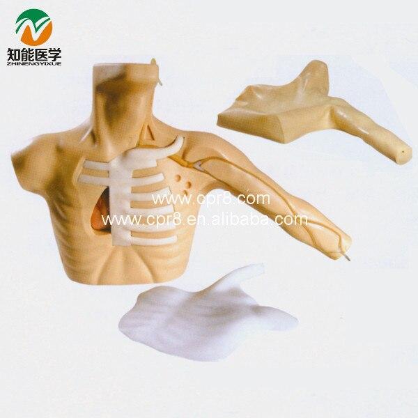 Peripheral Puncture Central Venous Catheterization Simulator BIX-L67A WBW227 advanced bone marrow puncture and femoral venipuncture simulator bone marrow puncture simulator model