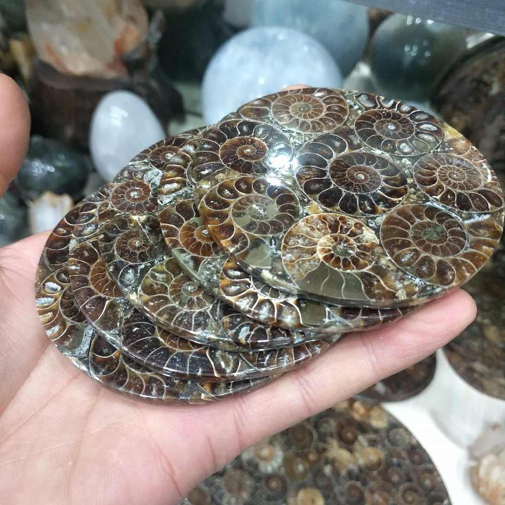 1Pcs  Ammonite Fossil Slice Plate Natura Shell a compassl MADAGASCAR FOSSIL SPECIMEN HEALING fashion wedding decoration