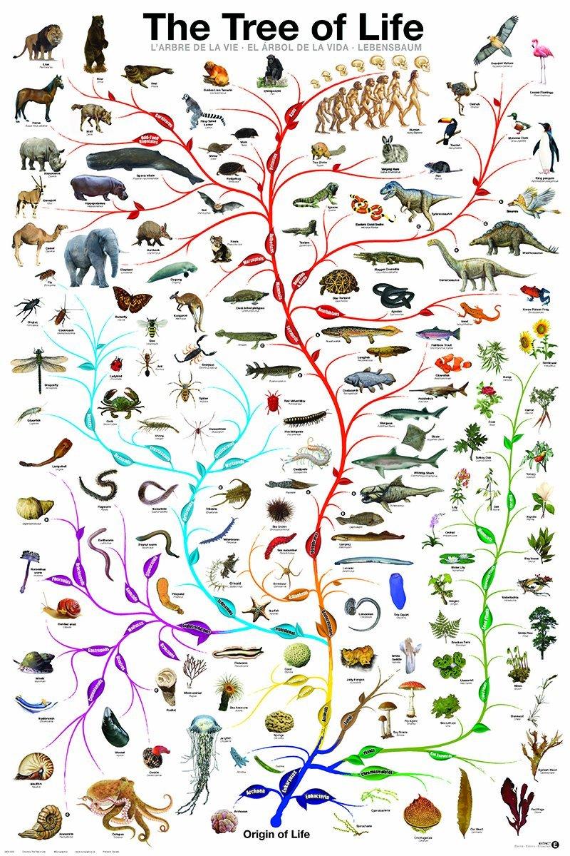 evolution of life - 736×1104
