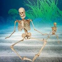 1ชิ้นพิพิธภัณฑ์สัตว์น้ำโครงกระดูกมนุษย์
