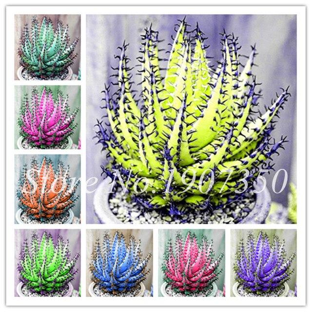 50 unids/bolsa raro Aloe Vera bonsái Color perfecto verduras y frutas belleza comestible cosméticos bonsái plantas para el hogar y jardín