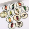 Reidgaller 50pcs 25mm Mixed Victorian Insects Bugs Photo Round Dome Jewelry Glass Cabochons Diy Findings
