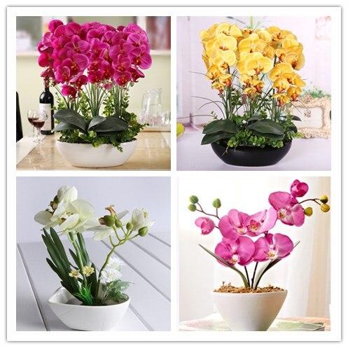 Semillas de orqu deas hidrop nicas flores de interior bonsai cuatro estaciones orqu deas - Semillas de interior ...