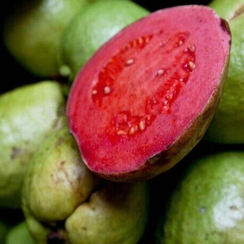 Thailand Fruit Wholesaler Email Mail: Online Buy Wholesale Guava Fruit From China Guava Fruit
