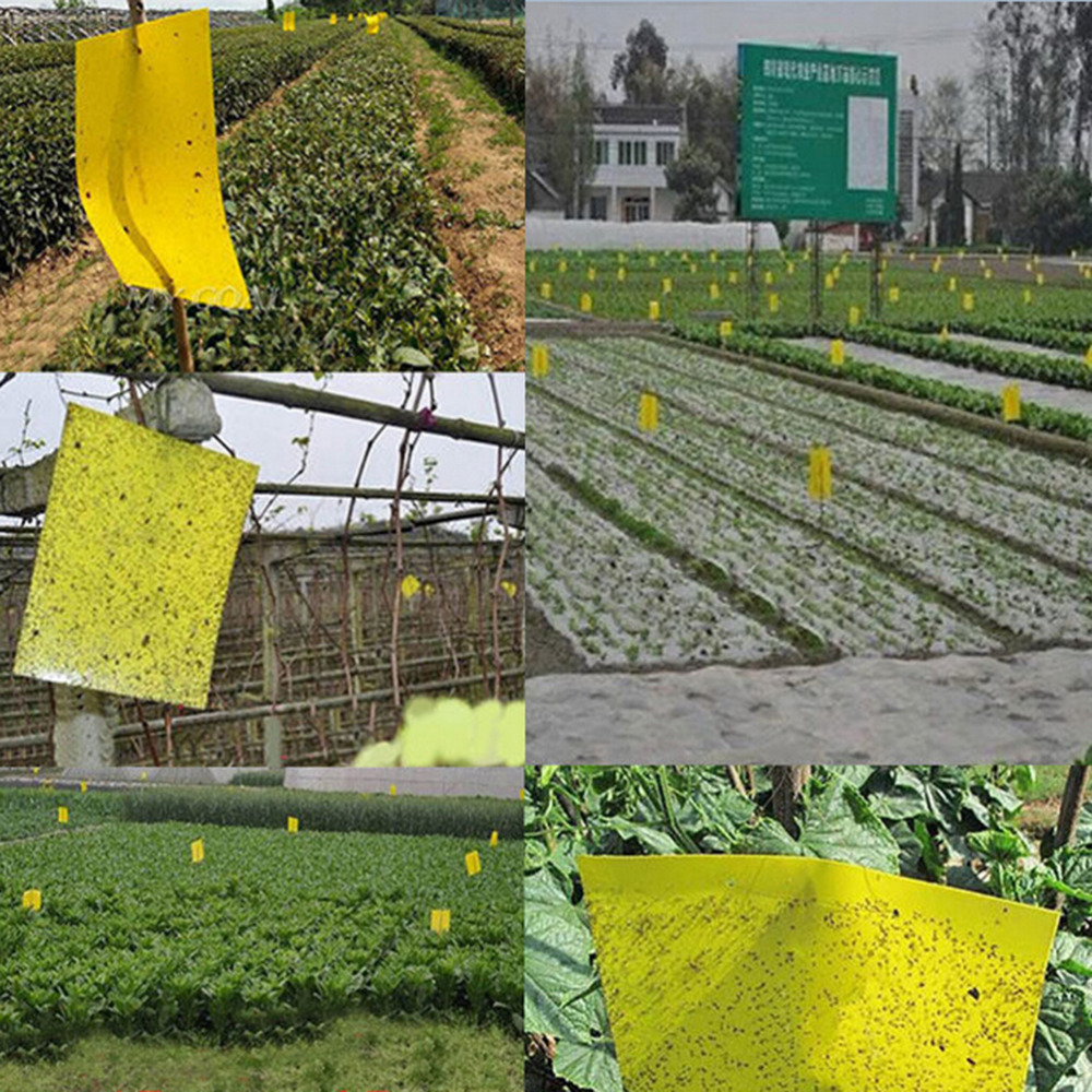 25x15cm Double Sided Sticky Flying Insects Thrips Gnats Aphid Fruitfly Trap Yellow Strong Flypaper Sticky Fly Paper Flytrap