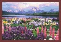 Море цветов в горах Вышивка Рукоделие Ремесла 14ct без надписей DMC DIY качество вышивки крестом Наборы ручной работы искусств