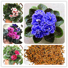 c3370b1905 Toptan Satış purple violets flower Galerisi - Düşük Fiyattan satın ...