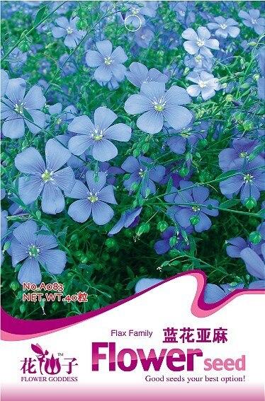 Цветок linum Perenne Семена, оригинальный Вышивка Крестом Пакет 40 зерна/мешок Сад бонсай цветок, Легко расти льна