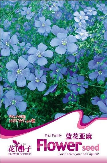 Flower Linum perenne Seeds, Original Package 40grains/bag Garden bonsai Flower seeds, Easy Grow Flax