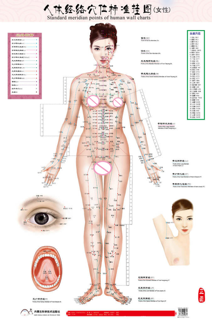 Standard meridian points of human wall chart male female acupuncture