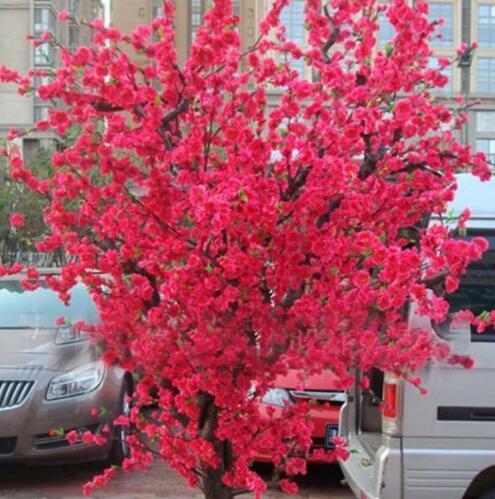 online kaufen großhandel garten bonsai bäume aus china garten, Best garten ideen