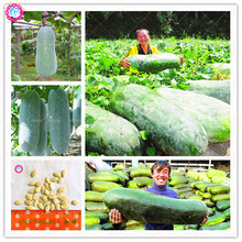 20pcs China giant winter melon seeds green organic Benincasa hispida wax gourd vegetable seeds for spring farm supplies