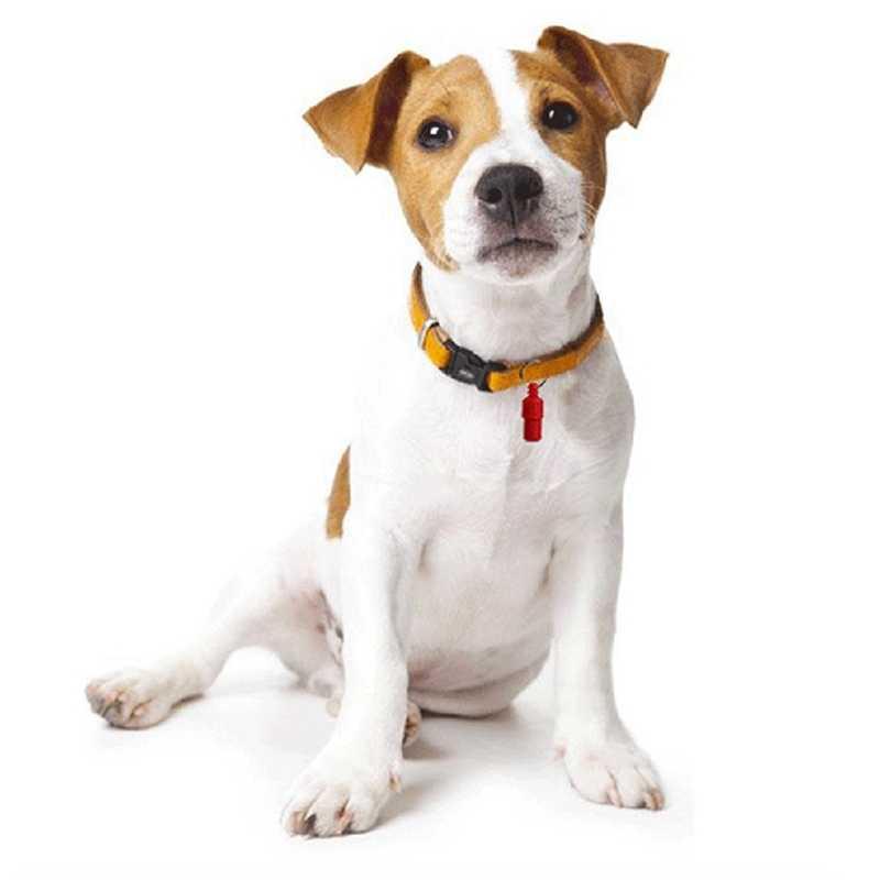 ¡Nuevo! Colgante con forma de tubo Anti pérdida 6 tarjetas de identificación para perros y gatos, bonita etiqueta con nombre para el almacenamiento de la identidad de las mascotas