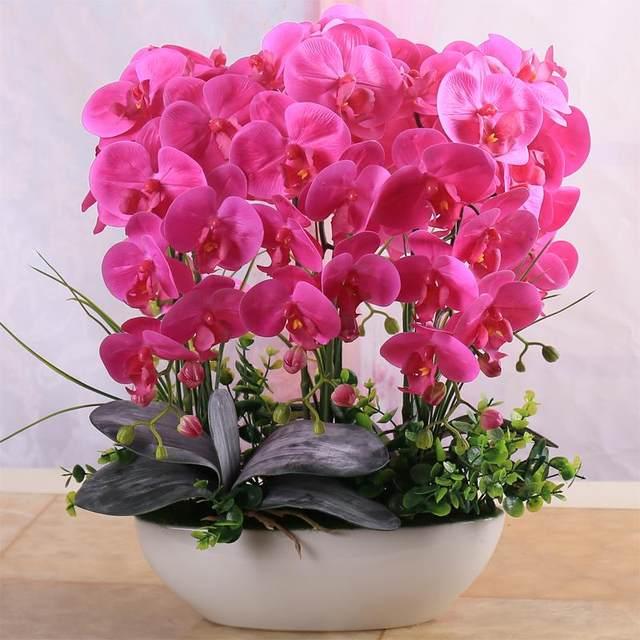 Online Shop 100 Pcs Beautiful Phalaenopsis plants Suite Living Room ...