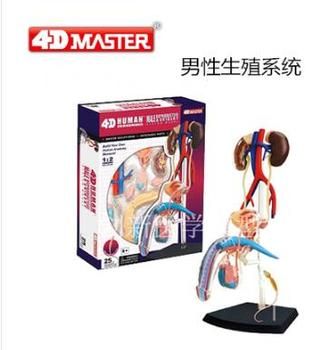 The 4D male reproductive system anatomical model consists of 25 parts the lymphatic system model senior lymphatic system anatomical model