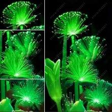 100 Pcs Rare Emerald Fluorescent Flower Seeds Night Light Emitting Plants for home Garden bonsai seeds