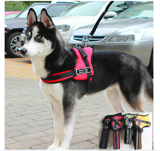 Training Leads For Dogs Pets At Home