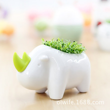 Network selling ceramics meaty miniature potted plants Creative Desktop factory direct radiation grass planting