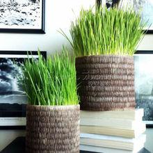 100 Certified Organic Hard Red Wheat  Seeds~healthful
