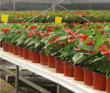 Aliexpress.com : Buy 10pcs/lot Plastic Pots For Green Plants Flower Pot  Plastic Vasos Decorativos De Flores Garden Pots From Reliable Vaso  Decorativo ...