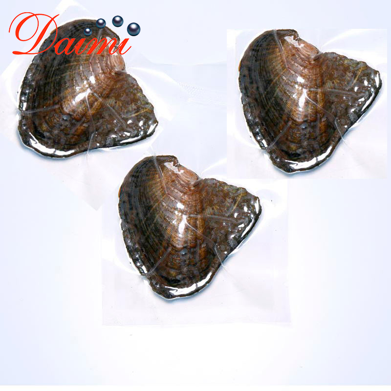 Rice-Bead Oysters Pearl Natural Vacuum-Packed Mussel DMKB0033 6-9MM Cultured Freshwater