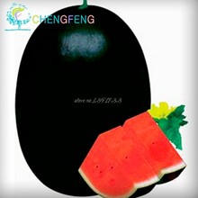 Hot Sale 50pcs Watermelon bonsai Fruit Vegetable bonsais Blue Yellow Green Watermelon Garden Home Plantas Fruits(China)