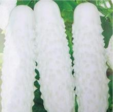 Hot Selling 100 pcs White Cucumber Seeds DIY Home Garden Green Vegetable Seeds Free Shipping