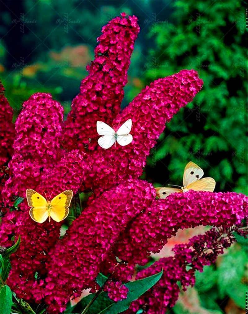 100PCS Japanese Lilac Bonsai Plant Butterfly Bush Potted Plants Perennial Lilac Tree Family Garden Decorative Planting