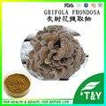 Cogumelo Maitake Extrato puro, Grifola frondosa Extrato Em Pó, Maitake Beta 1,3/1,6 D glucana 200 g/lote
